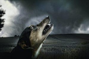 Dog Bite Injuries in Lexington, SC